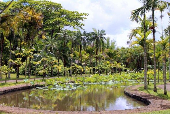 jardin-pamplemousse-bassin