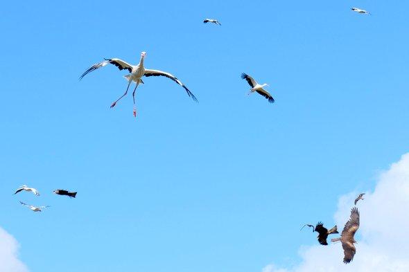 bal-des-oiseaux