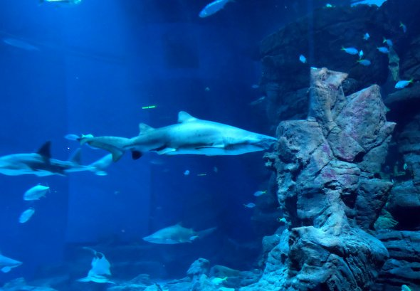 montpellier-requins-aquarium