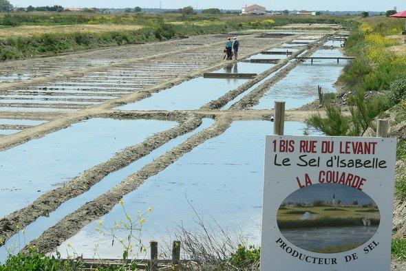 Saunier-Le-sel-d-Isabelle--1- (1)