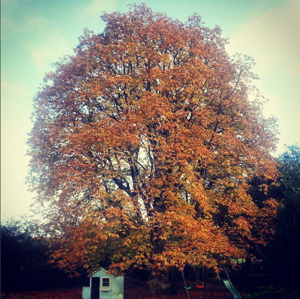arbre-vivaldi-automne-2