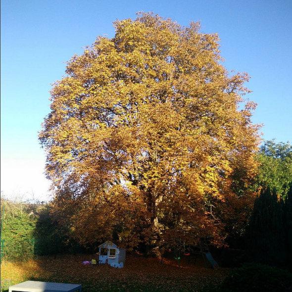 arbre-vivaldi-automne